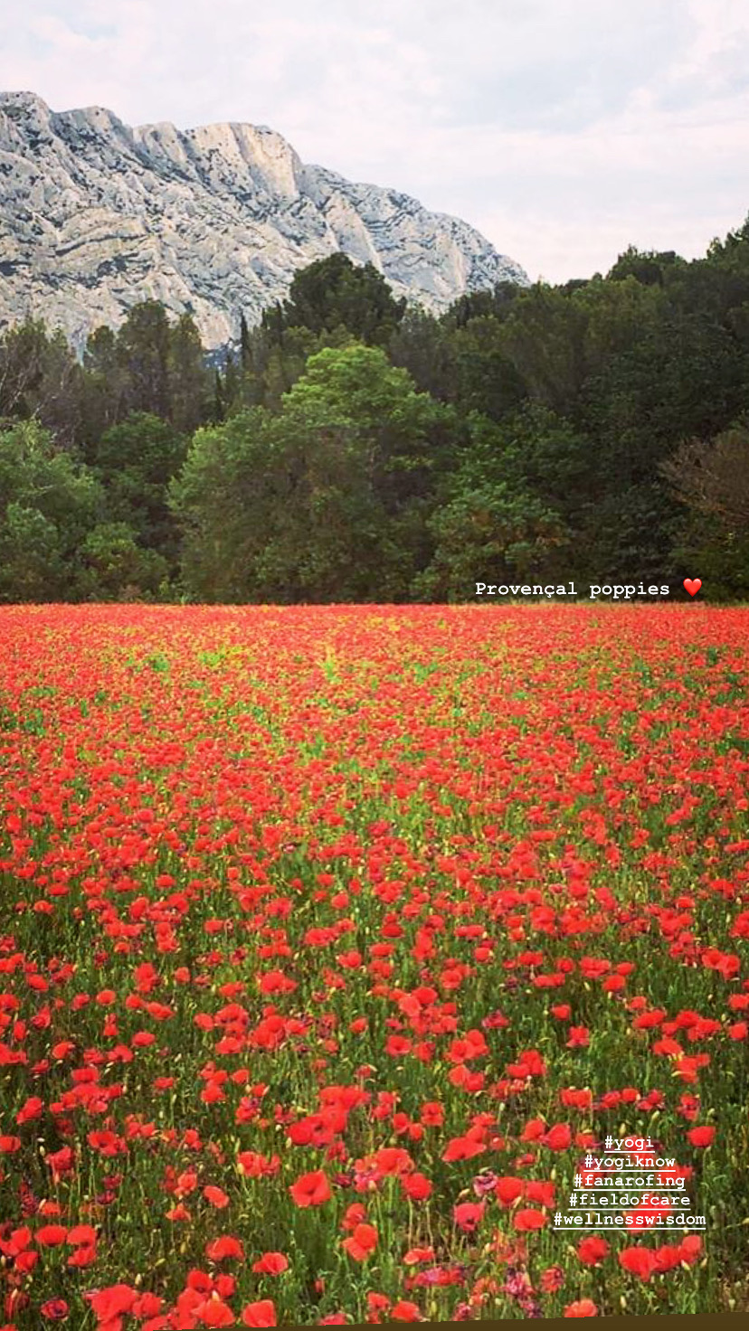Provence Poppies Remember Memorial Day Justine Fanarof Yoga